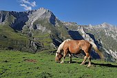 Col du Soulor : horse at the mountain pasture opposite the limestone massif of Gabizos, Pyrénées, France