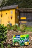 Notchleaf (Phacelia sp) box of seeds, Vegetable garden, Provence, France
