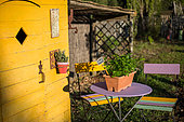 Pot of Parsley on a table in front of a yellow cabanon, vegetable garden, Provence, France
