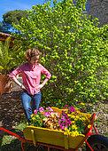 Jeune fille au milieu de différentes fleurs : Pelargonium à grandes fleurs (Pelargonium grandiflorum), Coréopsis (Coreopsis sp) au jardin, Provence, France