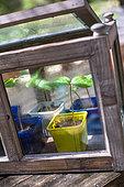 Morning glory (Ipomoea sp) Seedlings, Vegetable Garden, Provence, France