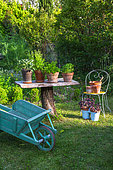 Wooden table with herbs in pots and wheelbarrow, Vegetable garden, Provence, France