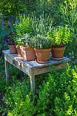Wooden table and herbs in pots, vegetable garden, Provence, France
