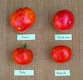 Tomatoes 'Ananas', 'Rose de Berne', 'Paola', 'Marmande', Vegetable garden, Provence, France