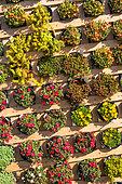 Presentation of succulent plants, Garden, Provence, France