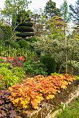 Coralbell (Heuchera sp) bed, Eric Borja Zen Garden, Beaumont-Monteux, Drome, France
