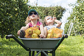 Children harvesting 'Falstaff' apples in a garden