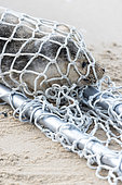 Rescue of a young seal, harbour seal, by the LPA on a beach on the Cote d'Opale, France