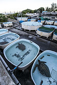 Kelonia's outdoor pools, turtles' protection centre, Reunion Island