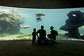 """Visitors in front of the window of the big aquarium at KELONIA centre, Reunion Island? Since sea turtles have become a protected species and the trade of their meat and shell has been banned, the """"Ferme Corail"""" in the Reunion Island, specialized in sea turtle farming for human consumption, reinvented itself in 1997 into turtle's conservation activities. The structure named """"KELONIA"""" grew and is now dedicated to their protection via a health care center that takes in a large number of injured turtles every week in order to heal them and release them in the ocean – after several weeks of treatment in some cases. Kelonia is also trying to put emphasis on the general public's awareness. That's why a museum and aquariums with turtles from all around the Reunion seas were created. And, the turtles, which are living within the aquarium, enable the biologists to go further in their studies of those rare species that are difficult to observe in nature. When released, some turtles are thus equipped with Argos beacons thanks to which we can know their movement in the ocean better and so, refine the protection of their natural environment."""