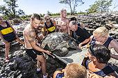Sauvetage d'une tortue marine de 200 Kg sur l'ile Juan de Nova, iles Éparses, France