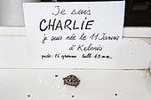 """Petite tortue terrestre née au centre de soins de tortues marines Kelonia et baptisée """"Charlie"""" en hommage à la tuerie de Charle Hebdo à Paris le même jour, La Réunion"""