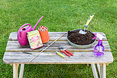 Plant cutting equipment on a garden table