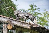Chat décoratif en pièces métalliques dans un jardin en été, France