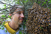 Honey bee (Apis mellifera) - A beekeeper face to face with a swarm of bees.