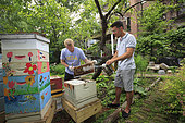 """Urban Beekeeping - Adam Johnson, 35 years old, associate lawyer in a New York law firm looks after four hives in a neighboring community garden. """"The New York City Beekeepers' Association to which I belong thinks there are about a hundred hives in New York. But, that's only counting our group and the known beekeepers. If you add people of Mexican and Puerto Rican origins, who have rural roots, and other groups of young people, the figures could get as high as 500 hives."""" USA"""
