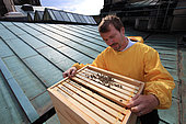 Urban Beekeeping - Frank Hinrichs, 43 years old, firmly grasping a frame on the roof of the Berlin Cathedral. After a faultless career as a financial and real estate advisor for a big hotel group, Frank bought a building and turned into a youth hostel. Amateur beekeeper, he loves to feel the palpitating life when he opens a hive. His hotel is 300 meters from the Berlin Cathedral and he can visit his bees practically every day during the swarming period.
