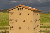 Building entirely constructed for the nesting of birds like Lesser Kestrel or the Western jackdaw (Corvus monedula or the Little Owl (Athene noctua) or European Roller, Catalogna, Spain