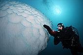 Iceberg under water, Ammassalik Fjord, Greenland