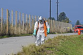 Weed control on road side, Brognard plateau, Franche-Comté, France