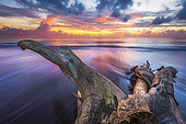 Dead tree washed up on beach of northern Mayotte, Indian Ocean