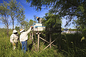 Boatmen's beekeepers of the Parana Delta. All of Carlos' hives are set up on piles. Despite this precaution, he lost three quarters of his stock, nearly 800 hives, when in 2006 the water rose four meters in a few hours. Argentina