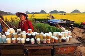 Miel jaune - Apiculture et tourisme de masse sur les champs de colza à Luoping, Yunnan. Les apiculteurs proposent toute la richesse de la ruche aux touristes citadins qui découvrent gelée royale, pollen et différents miels. Le plus prisé est le miel de colza récolté devant vous. Chine
