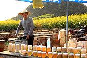 Miel jaune - Apiculture et tourisme de masse sur les champs de colza à Luoping, Yunnan. Un jeune apiculteur derrière son étal de vente de miel utilise un extracteur de miel manuel pour récolté. Chine
