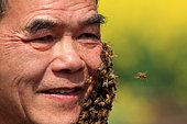 Miel jaune - Apiculture et tourisme de masse sur les champs de colza à Luoping, Yunnan. La barbe d'abeilles demande un sang-froid à toute épreuve. Chine