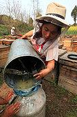 Miel jaune - Apiculture et tourisme de masse sur les champs de colza à Luoping, Yunnan. Le miel est récolté au fur et à mesure, les cadres de rayons de miel vidé avec des centrifugeuses manuelles. Chine