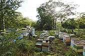 On the roads of perpetual honey flow, Terry Brown, 61 years old, started keeping bees at the age of sixteen as a hobby. NSW, Australie
