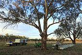 Sur les routes de la miellée perpétuelle, Préparation à la transhumance, chargement des ruches sur le rucher de Franck Malfroy, un apiculteur commercial qui possède un cheptel de 1 000 ruches élevées en apiculture biologique. NSW, Australie