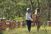 On the roads of perpetual honey flow, Tim Malfroy, 32 years old, during the harvest of the hives. Once taken out of the hives, the honey chambers are transported by vehicle.
