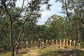 Sur les routes de la miellée perpétuelle, Tim Malfroy recherche toujours les meilleurs emplacements pour installer ces ruches warré. NSW, Australie