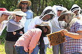 On the roads of perpetual honey flow, 54 In Bathurst, Tim Malfroy's team during a weekend of courses in natural apiculture with the Warré type of hives. NSW, Australia