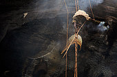 The honey of the untouchables, Harvest image. Them Mari hushes the bees away with the smoke from his makeshift smoker, and with the bamboo pole he removes the brood comb to access the honey. Tamil Nadu, India