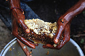 The honey of the untouchables, A fragment of honeycomb is about to be hand pressed. Tamil Nadu, India