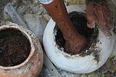Hand gathering from an earthen hive. Mexico stingless honeybees and equitable trade