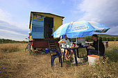 Onéa Dinu's team set up a table for their meals near the trailer. The bees of the Carpatian species are gentle and a simple parasol at the right height guarantees the tranquility of the beekeepers as they share their meals. Romanian traveling beekeepers, Romania