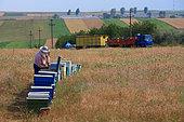Romanian's migrants beekeepers. Romanian traveling beekeepers, Romania