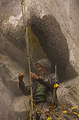 """The rebokipe are the ladder attendants (""""rebo"""" means rope ladder in the Rai language). With their full weight hanging from the ladder, they keep it pulled tight to facilitate the guru's progress and move the ladder from one nest to another. Solukumbu, Nepal. The tiger men honey hunting"""