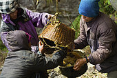 """The men responsible for recovering honey are the khudhapup (""""khuda"""" means honey in Rai). They empty the basket into a large, repoussé metal jar before filtering it. Solukumbu, Nepal. The tiger men honey hunting"""