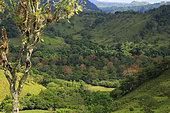 Paysage, Costa Rica. Le monde tropical des abeilles sans dard