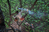 Les Banas étaient apiculteurs bien avant de devenir agriculteurs il y a dix ans. La propriété des arbres qui portent les ruches est bien antérieure à celle de la terre et elle se transmet par héritage. Ainsi, sur le terrain de la concession d'Oïta, un arbre accueille une ruche mais Oïta ne possède ni l'un ni l'autre et ne peut en aucun cas couper cet arbre sans la permission du propriétaire de la ruche. Peuple Karo, Vallée de l'Omo, Ethiopie