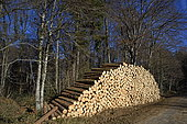 Timber cutting and storage of fir wood in forest, Vandoncourt, Doubs, France