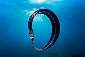 Deep-Sea Pelagic Eel, Egypt, Red Sea.