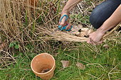 Filling a flowerpot filled with straw to attract earwigs