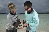 Clare Keating Daly, tagging a Green Turtle (Chelonia mydas) with Ryan Daly, Marine Biologist and Research Director of the Arros Research Center of the Save our Seas Foundation. St. Joseph's Atoll, Seychelles