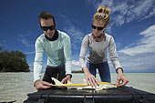 "Clare Keating Daly and Ryan Daly, marine biologist and research director of the Arros research center of the ""Save our seas"" foundation measuring a young Lemon shark (Negaprion brevirostris), St Joseph's Atoll, Seychelles"