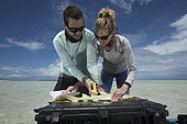 "Clare Keating Daly and Ryan Daly, marine biologist and research director of the Arros research center of the ""Save our seas"" foundation measuring and tagging a young Lemon shark (Negaprion brevirostris), St Joseph's Atoll, Seychelles"